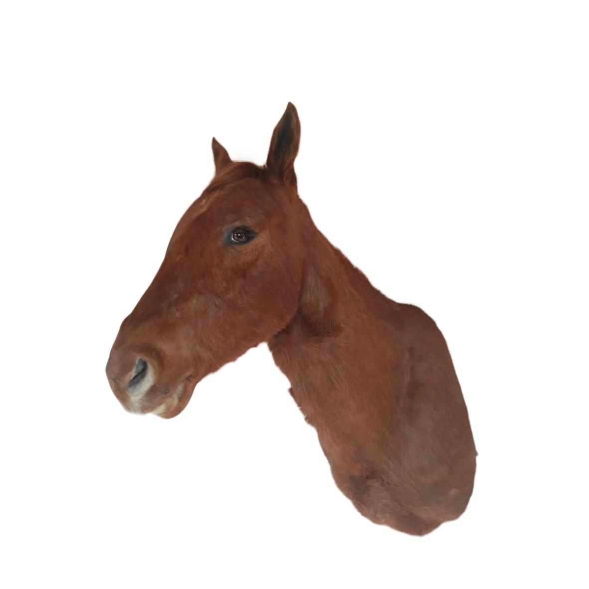 HORSE SHOULDER MOUNT