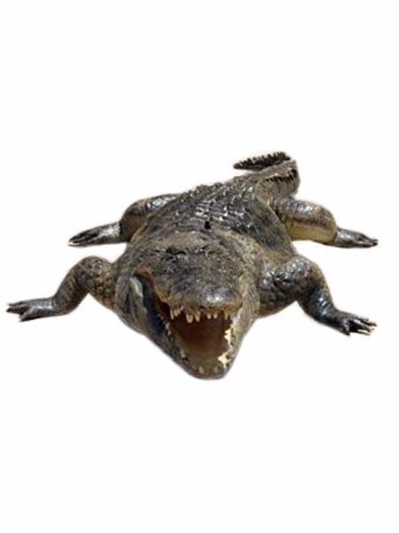 Crocodile Mounts For Cmf01